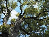 常緑樹は秋 - 瞳の記憶