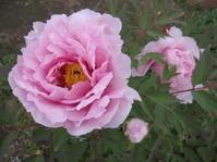 いずれの花も美しい - 花の自由旋律