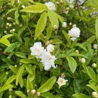 咲きはじめました♪ - さにべるスタッフblog     -Sunny Day's Garden-