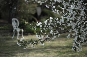 大島桜 ** - ふわふわ日和