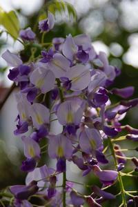庭の花 - kogomiの気ままな一コマ