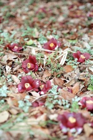 4.17 - anemone