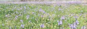 その花の名は  大西晶子 - 南の魚座 福岡短歌日乗