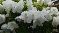 季節は移りゆく、春から - 続マシュービ日記