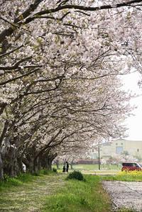 春記念 - 今日の空+α2
