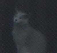 不思議★窓猫 - 月夜飛行船2