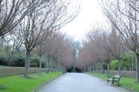 公園の桜並木 - 毎日テニス(旧 Rudern macht Spass.)