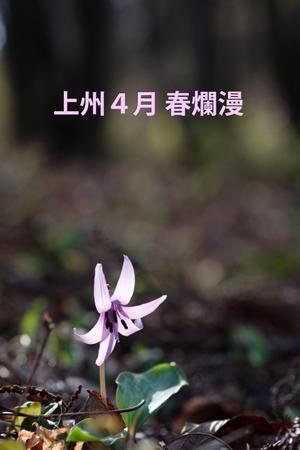 上州4月春爛漫 - 還暦からのネイチャーフォト