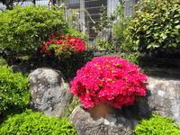 春色の庭と間引き菜 - ゆうゆう覚書
