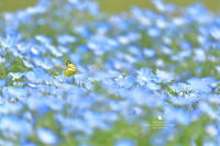 青 - お花びより