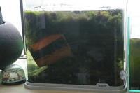 2021.04.17.[水草」の「はたらきか?」水が、きれいです。 - 秋葉原・銀座 PHOTO by ari_back