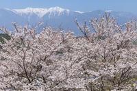 京都写真展を終えて - Digital Photo Diary