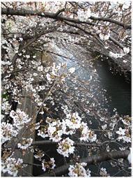 3月19日のこと。観光客がやってくる前に桜が見れたね - nazunaニッキ