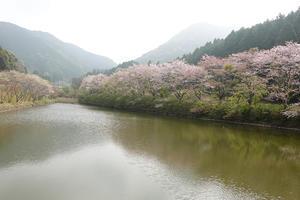 kaji  ブログサイト