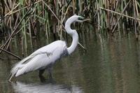 写真展を見に - 『彩の国ピンボケ野鳥写真館』