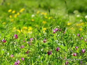公園の野草花 - デジカメ散歩悠々