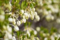 春爛漫の候・・・3 - 桐一葉2