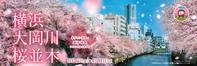 ほぼ満開の頃 『大岡川 桜2021』 - 写愛館