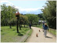 わん友さんと公園散歩と美味しいランチ♪(^^♪ - さくらおばちゃんの趣味悠遊