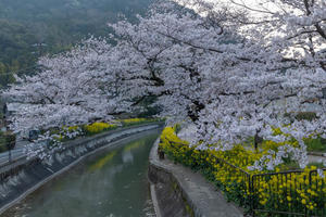 山科疎水 - 京都写真(Kyoto Photo)