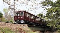 藤田八束の鉄道写真@貴婦人阪急電車と桜の美しい姿、気持ちよさそうな貨物列車の写真・・・・どれも最高です。貨物列車とガーデニング③ - 藤田八束の日記