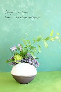 定期装花からリューココリーネ:シリウス - Impression Days