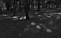 公園の木漏れ日 - きくじの独り言