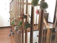 クリスマスローズのドライと花木の苗 - 60代からの女道