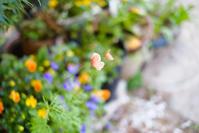 花の写真(2) - 空の下で 2.1