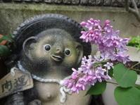 初めて咲いたライラックに、たぬきさんもうっとり。 - がちゃぴん秀子の日記