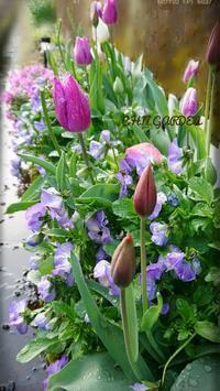 春の花壇 - どんぐりの木の下で……