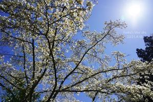 山に咲く花たちを確認しながら山道上れば~♪ - FUNKY'S BLUE SKY
