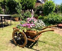 強風でシュートが沢山折れました(´°̥̥̥̥̥̥̥̥ω°̥̥̥̥̥̥̥̥`)と、花車プランター♡ - 薪割りマコのバラの庭