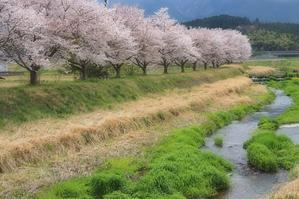 桜 23   兵庫県 - ty4834 四季の写真Ⅱ