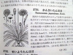 タンポポの日本在来種No.2093 -
