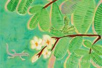 緑の季節に展示をいたします - 山崎綾子の心に美味しいあれこれ