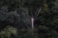 孤高の枯れ木 - フォトな日々