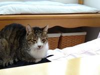 ここが好き&松と梅 - 黒猫屋のにくきゅう