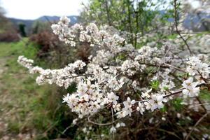 春爛漫カエル・つくしにも会えた古城への道、ペルージャ - イタリア写真草子