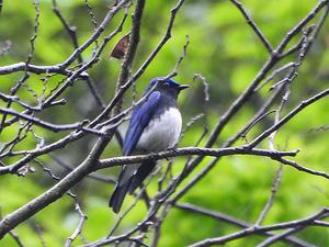 birdwatching in 大森② - 清治の花便り
