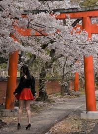 京都桜さんぽ ~赤い鳥居~ - 雲母(KIRA)の舟に乗って
