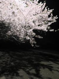 桜は静かに終わりを迎えています - 長女Yのつれづれ記