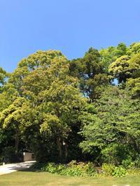 緑陰 - 花の窓