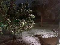 見慣れない新緑に雪 - しんしな亭 in シンシナティ ブログ