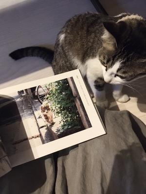 泣ける猫写真集と庭を眺める猫たちとハグルマブローチとマスクケース状況とcherishさん状況といただきものと立ち上がる羽ちゃんと明日も11時オープン - ひよこ雑貨店(11冊目)