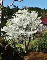 爽やかな春の庭 - 自然の中でⅡ