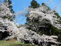 早咲き - 北国の田舎暮らし