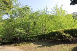 午後から葉山散歩♪ - ハナ&ララとお散歩!