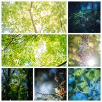 spring#24 - The collection of photograph