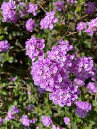 花と緑のある日々 - ふたり暮らしの生活向上委員会